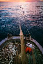 :) hey un mi piace non sarebbe male , anzi :) considerando l'uscita futura del libro #piscaturi sulla #pesca in #sicilia , questo concorso potrebbe essere davvero d'aiuto, grazie mille e condividete - Guarda anche tu le foto del progetto di Roberto Zampino del concorso LEICA PHOTOGRAPHERS AWARD 2013. Mi piace!