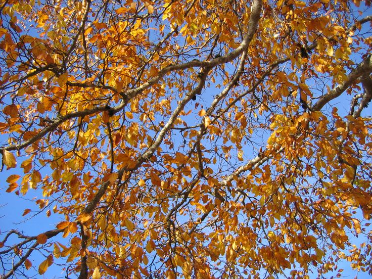 #FallFoliage, autumn is coming also in Veneto! An explosion of colours