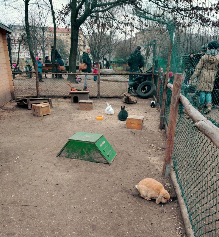 Feed farm animals at Görlitzer Park