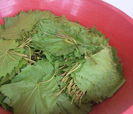 yaprak sarma salamura yatırma (6)