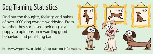 Dog Training Information - Facts and Figures | Pet365.co.uk