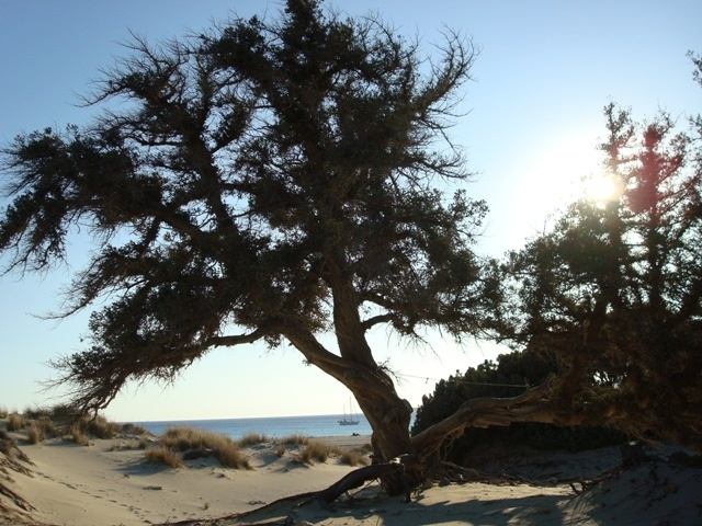 Elafonisos beach - a tree on the beach...