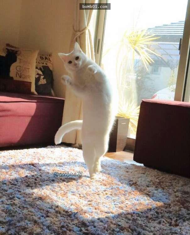 Wanita Ini Pasang CCTV Di Rumah Untuk Awasi Kegiatan Kucingnya. Apa Yang Dirakamkan MENGEJUTKAN !!!|Pernah terfikir apa agaknya yang dilakukan kucing peliharaan anda di rumah apabila ditinggalkan sendirian? Adakah kucing peliharaan anda akan duduk di belebas tingkap memerhatikan burung-burung di luar terbang berkicauan? Adakah kucing peliharaan anda hanya akan tidur di sofa sambil menunggu kepulangan …