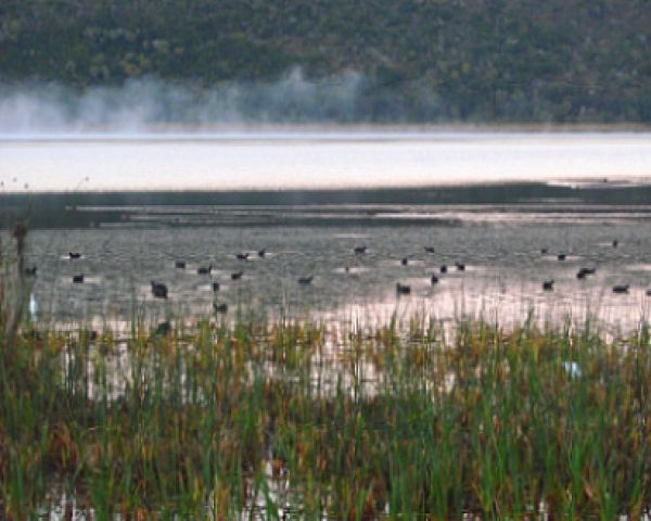 The Wilderness–Sedgefield Lakes Complex incorporates the Wilderness Section of the Garden Route National Park and the CapeNature Goukamma Nature Reserve along the coast east of Wilderness