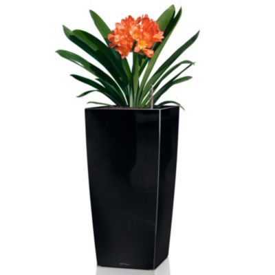 Cubico 30 Self Watering Planter by Lechuza