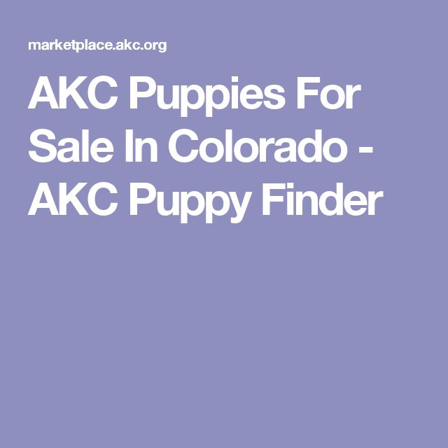 AKC Puppies For Sale In Colorado - AKC Puppy Finder