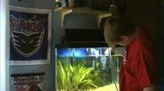 ♥ Fish Care Tips ♥  Fish Care How To Clean A Freshwater Aquarium
