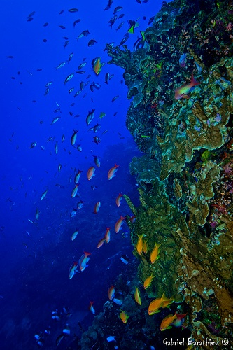 Coral Reef Life Liberatingdivineconsciousness