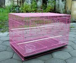 Berternak Burung Lovebird menjadi salah satu alternatif usaha yang populer saat ini. Ingin bagaimana cara Beternak Lovebird untuk pemula