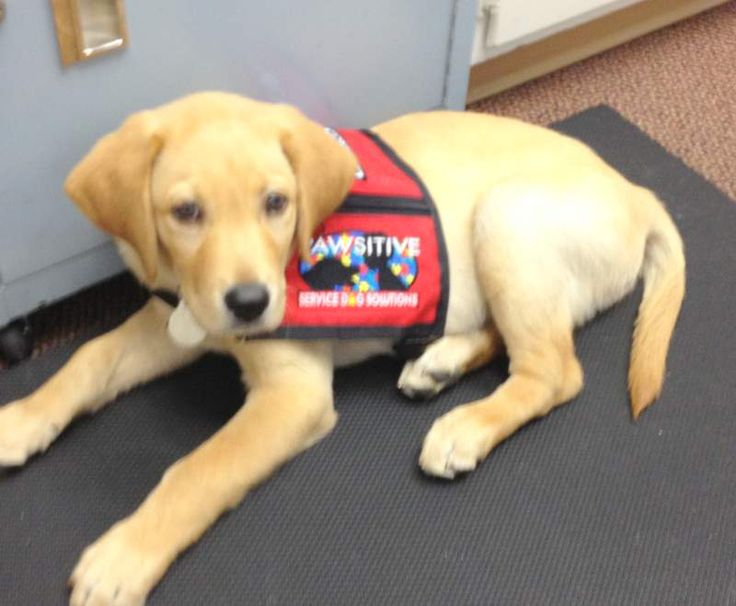 How To Train Service Dogs For Vets In Arizona