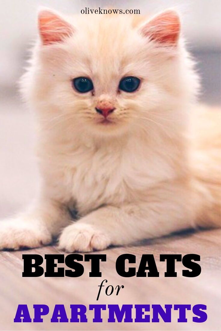 The Best Cats For Apartments Oliveknows Cool Cats Cat Quotes Funny Cat Adoption