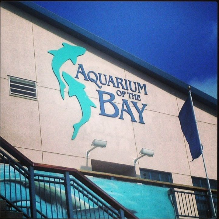 Aquarium Of The Bay In San Francisco Ca The San