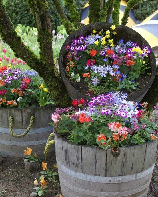 Barrel flower potsGardens Ideas, Container Gardens, Spring Flower, Barrels Planters, Wine Barrels, Whiskey Barrels, Flower Gardens, Flower Pots, Yards Ideas