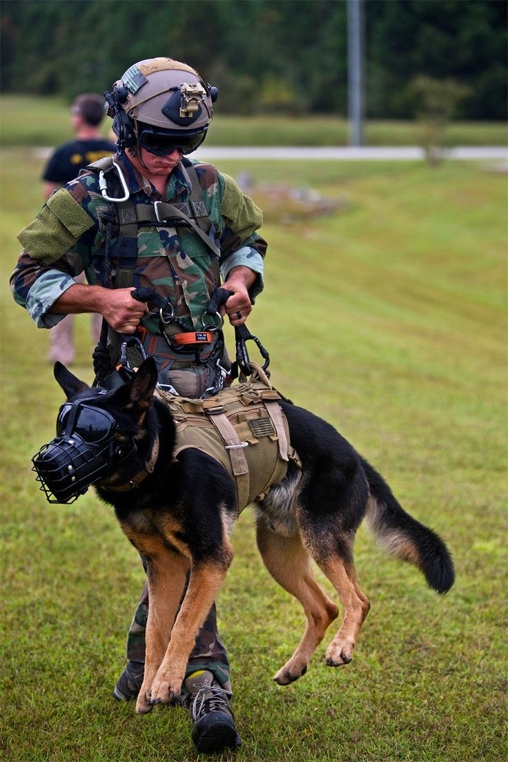 Police dogs at work