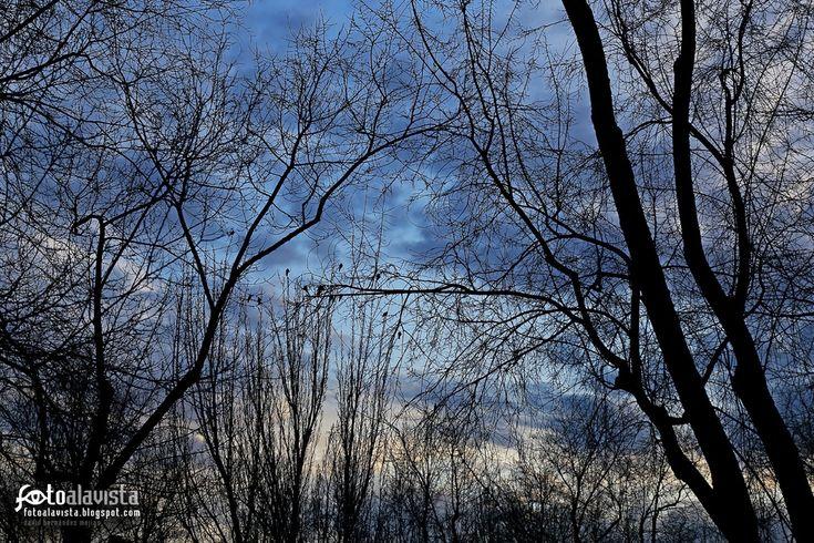 """AVES DESDE MI VENTANA. """"... Y vuelo con mis anhelos de ave, del amado árbol mío hasta el bosque lejano, cuando, al himno jocundo del despertar de Oriente, sale el alba desnuda, y muestra al mundo el pudor de la luz sobre su frente.""""  Rubén Darío  Si estás interesado en adquirir esta fotografía solicita presupuesto según características en el mail fotoalavista@alavistacreatividad.com. Te la imprimimos para decorar tu casa o lugar de trabajo, en el tamaño y material que prefieras"""