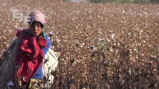 White Gold - the true cost of cotton by Environmental Justice Foundation