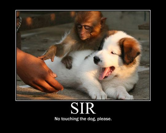 .: Animal Pictures, Funny Pics, Animal Humor, Funny Pictures, Pet, Demotivational Posters, Funny Stuff, Funny Animal, So Funny