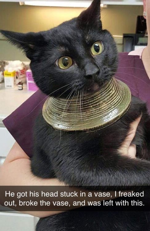 Now my true Egyptian form is revealed! Worship me with gifts of tuna, you human scum!