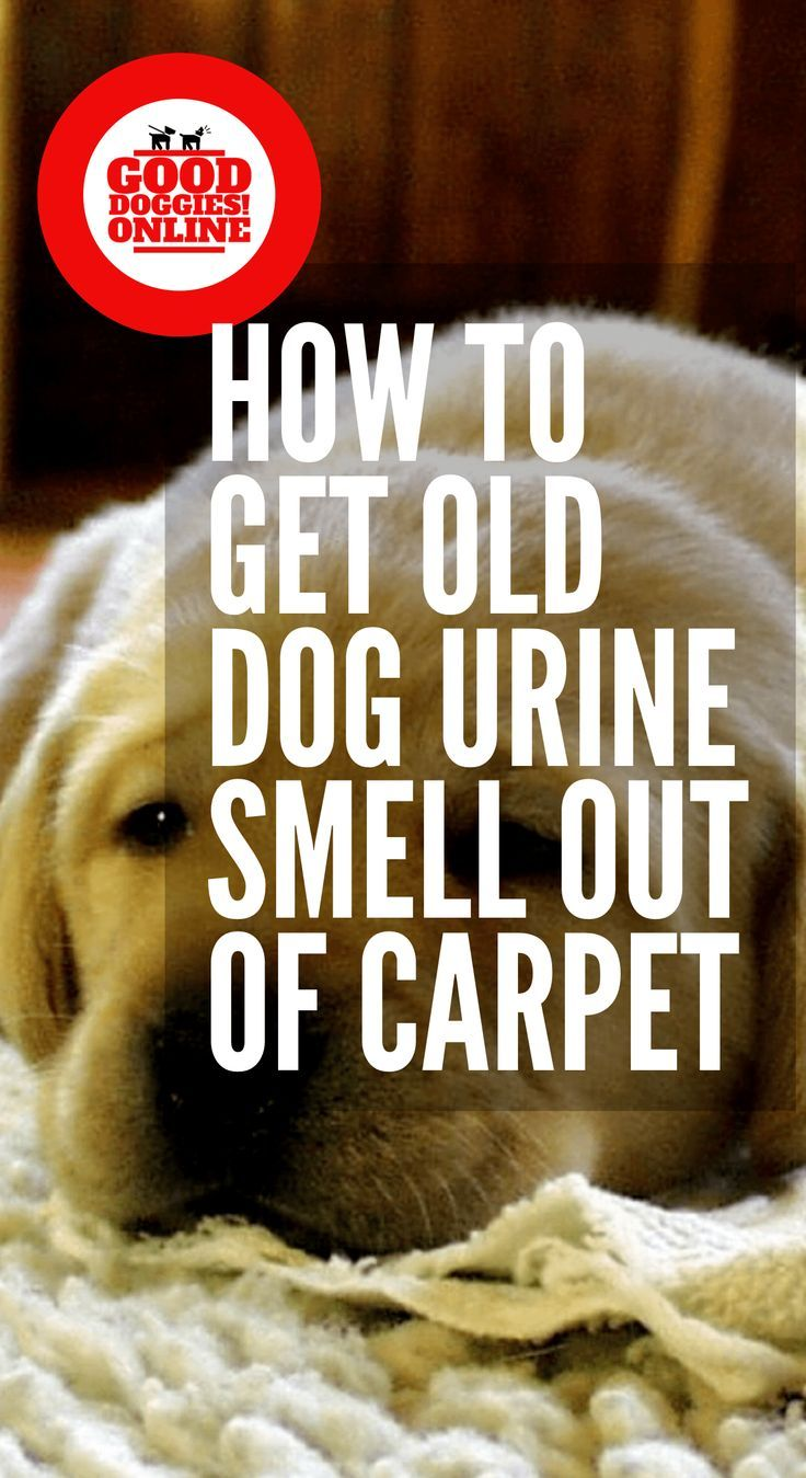 How To Get Old Dog Urine Pee Smell Out Of Carpet Dog Pee Smell