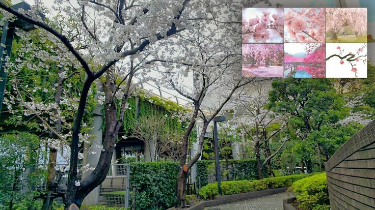 TAKAGI Kensuke - Google+ - cherry blossom #throughglass #cooljapan #100tokyo