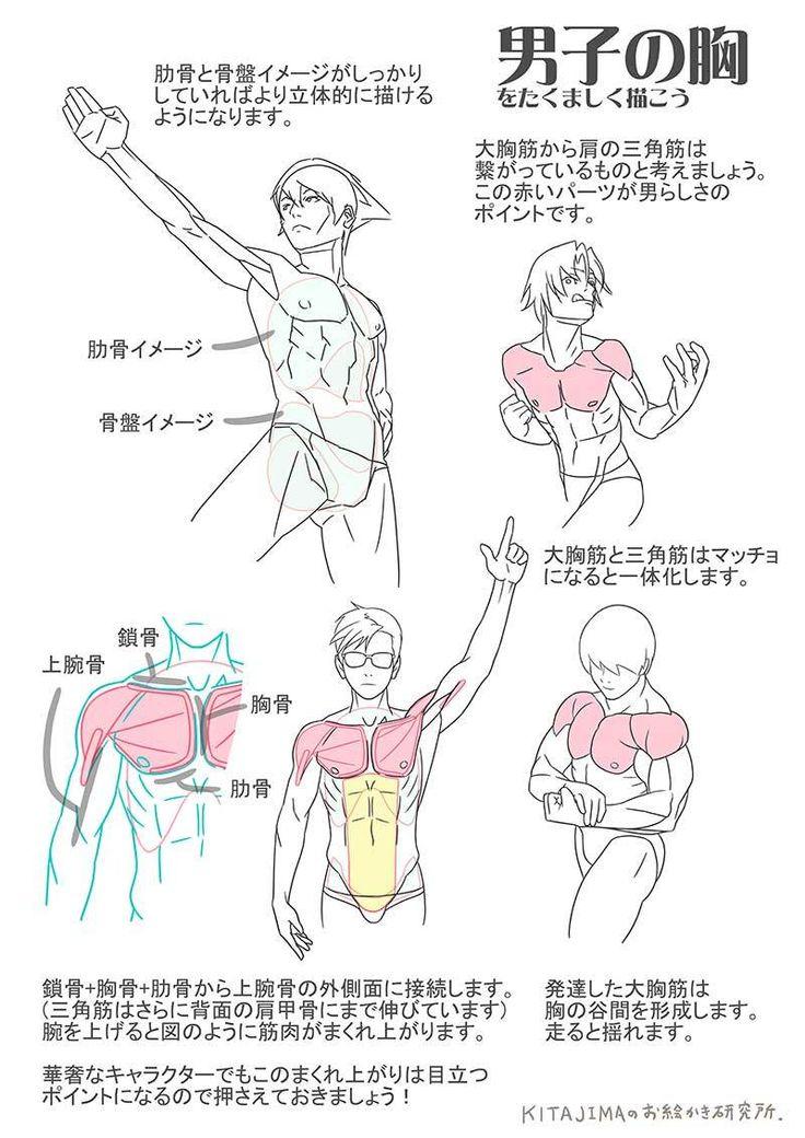 胸部   KITAJIMAのお絵かき研究所