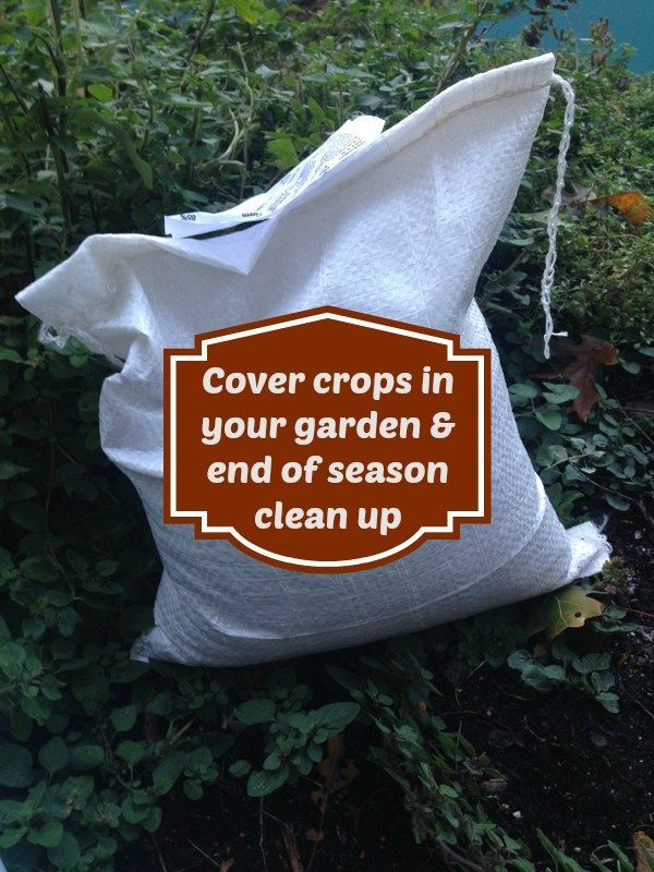 Using cover crops isn't just for big scale farmers, you can use them too!