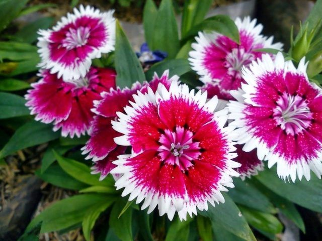 Tanaman Hias Bunga Yang Sering Digunakan Untuk Wordpress Plants Wordpress Site