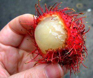 1 Strange Fruit That 'Destroys' Diabetes