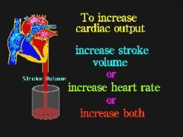 How the Heart works: Step by Step Functions with diagrams.