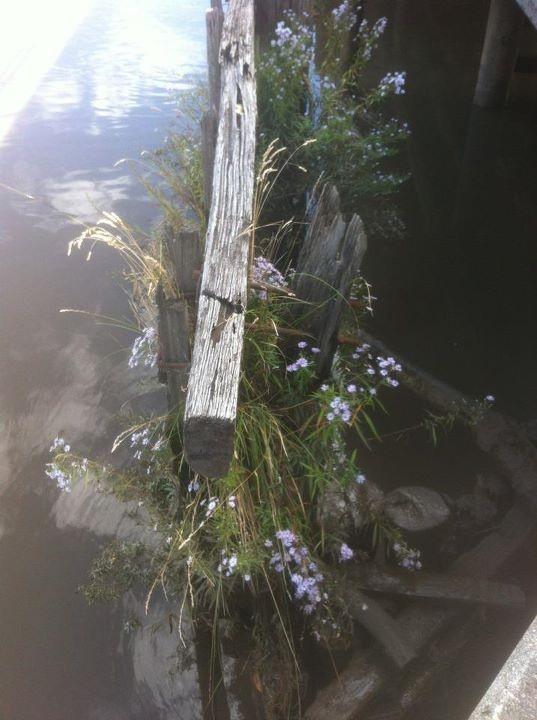 Tamar River, Launceston.  Muddy waters....
