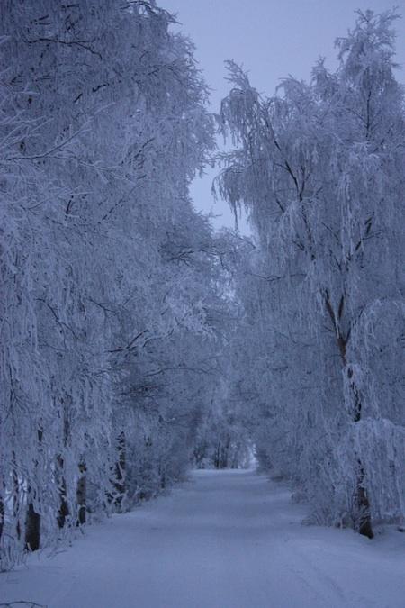 Huurrepuita huokuilee talvitaivaan alla  hiihtää Jouluenkeli hiljaa kuutamalla.
