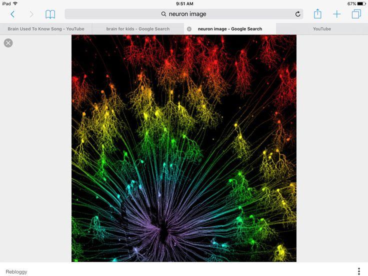 1000 Ideas About Human Soul On Pinterest: 1000+ Ideas About The Human Brain On Pinterest