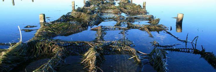 Freycinet Marine Farm