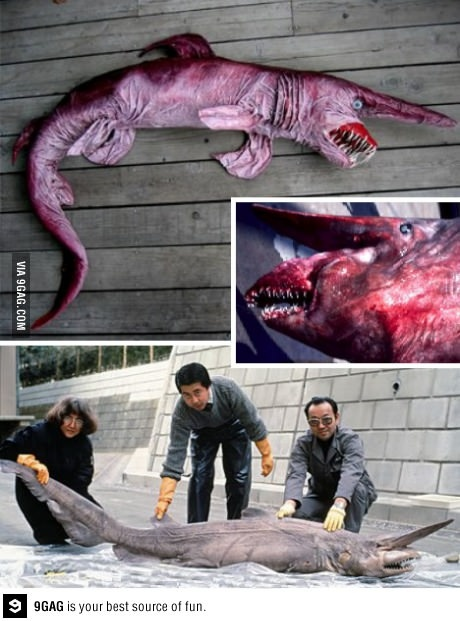 Deep sea goblin shark The extremely rare Goblin Shark has only been sighted less than 50 times since its discovery in the 19th century.