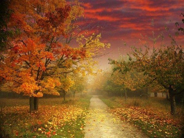 Deco Automne Romantique Bruyere Erica : Id� es sur le thème paysage d automne