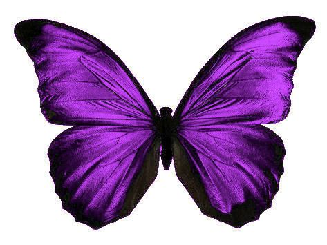 Butterfly for tattoo