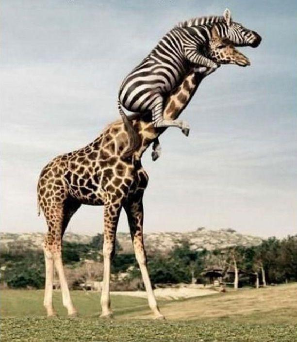 реки картинка с жирафами налейте мне еще как раз
