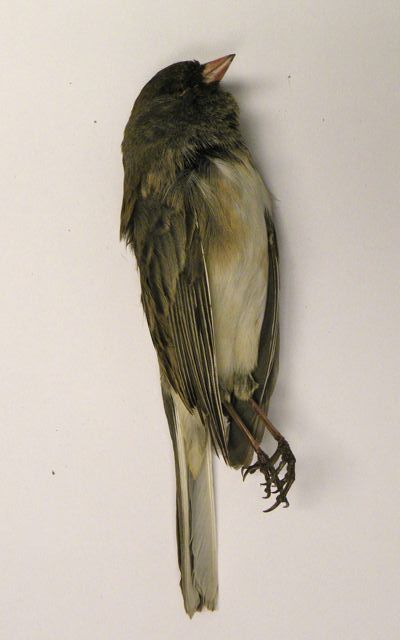 Obviously we won't use an actual dead bird, but could emulate something like this. Not too grotesque, fairly straightforward.