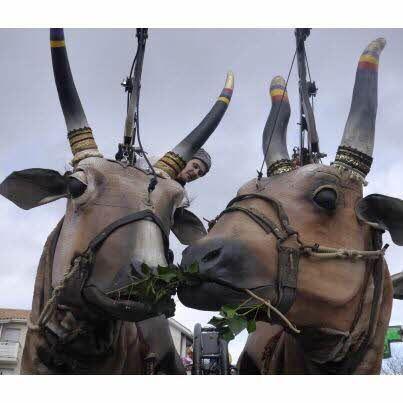 Edition de Sarreguemines Bitche | Sarreguemines : des vaches sacrées et émouvantes…