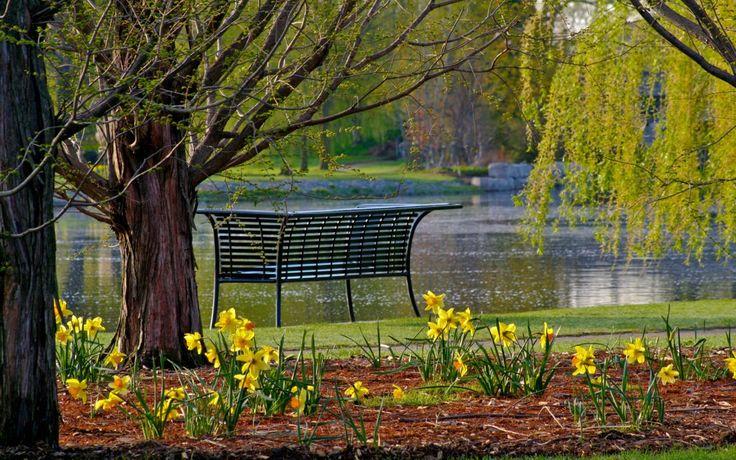 Bench at Southside Pond