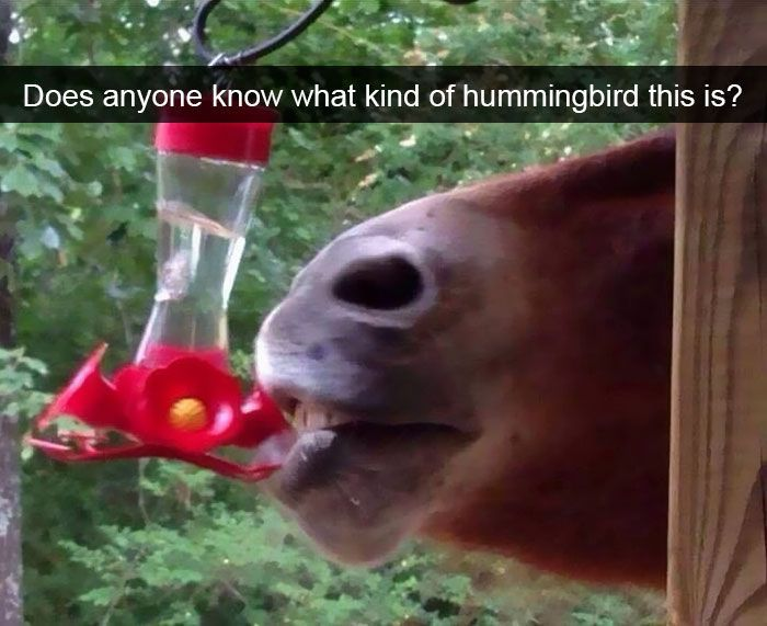 40+ Hilarious Animal Snapchats Guaranteed To Make You Laugh Out Loud