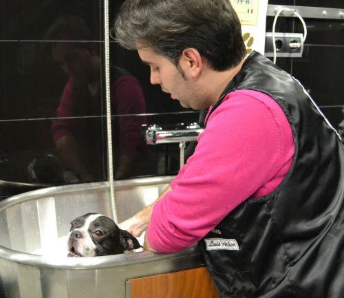 Curso avanzado spa maskokotas - Academia de peluquería canina Maskokotas