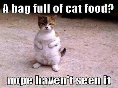 Does Friskies Make Kitten Food