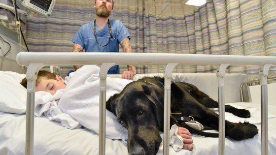Pet therapy, allarmi in caso di crisi diabetiche, assistenza domestica, indicazione delle prime manifestazioni di un tumore: i nostri amici a quattro zampe