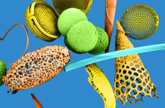 image #0073jp15 Color enhanced Scanning Electron Micrograph (SEM) showing marine microfossils (including Radiolarians, Diatoms, Foraminifera). Magnification: 540X, printed at 5x7. #photo #image #fossile #meb #microfossile