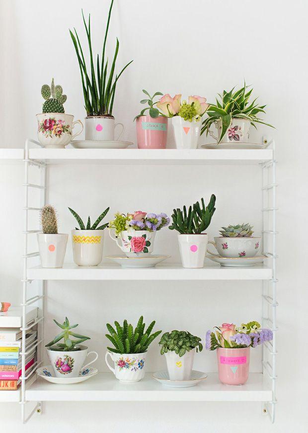 Plantas de inverno – Algumas plantas atingem o esplendor justamente no tempo gelado e ganham destaque na estação.