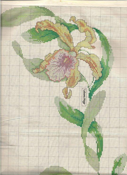 Gallery.ru / Фото #2 - Orquideas - mariacece