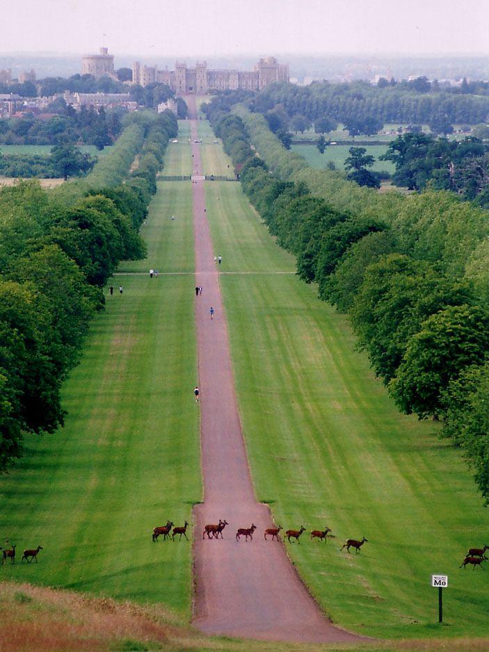 Great Windsor Park, the road leads to Windsor Castle, UK