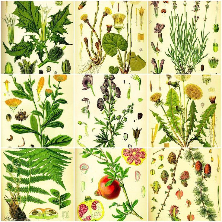 Bernstein+fossil+(Picea+succinifera)+&#34Deutscher+Amber&#34+Fossiles+Harz,+Ostseeküste,+Baltikum+WD+-+3+ml
