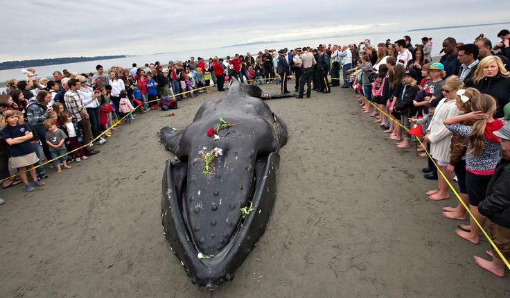 50 de las mejores fotos de animales 2012 - Taringa!